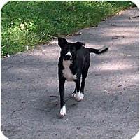 Adopt A Pet :: Spirit - Byrdstown, TN