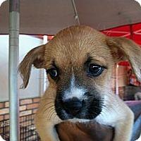 Adopt A Pet :: Nala - North Hollywood, CA