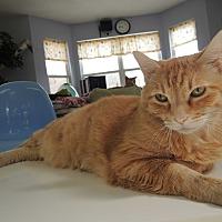 Adopt A Pet :: Pyro - House Springs, MO