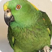 Adopt A Pet :: Max - Asheville, NC