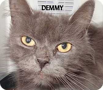 Domestic Longhair Cat for adoption in Lapeer, Michigan - DEMMY--GRAY DLH! FEE WAIVED