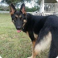 Adopt A Pet :: Echo - Fort Worth, TX