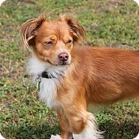 Adopt A Pet :: REX-ADOPTED!! - Lynnwood, WA