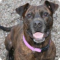 Adopt A Pet :: Mary - Norfolk, VA