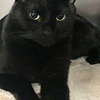 Adopt A Pet :: MARVIN - Tucson, AZ