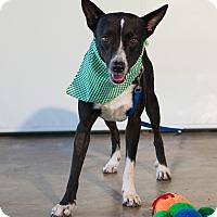 Adopt A Pet :: King - Vancouver, BC