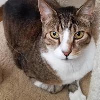 Adopt A Pet :: Travy - Nogales, AZ