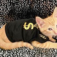 Adopt A Pet :: SUNSHINE - Northfield, OH