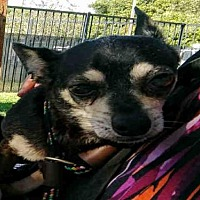 Adopt A Pet :: BERKLEY - Long Beach, CA