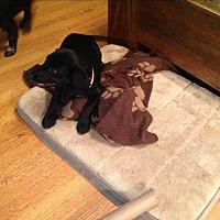 Adopt A Pet :: Deliliah - Northport, AL