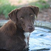 Adopt A Pet :: Panto - Jewett City, CT