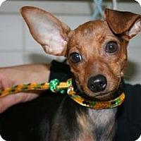 Adopt A Pet :: Malia & Sasha - Canoga Park, CA
