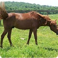 Adopt A Pet :: Reddy - Lyles, TN
