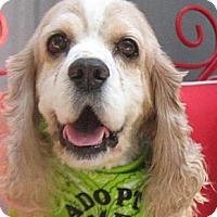 Adopt A Pet :: Wally - Rancho Mirage, CA