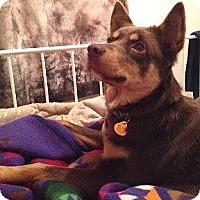 Adopt A Pet :: Trixie - Hamilton, ON