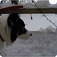 Adopt A Pet :: Charlie-PENDING! - kennebunkport, ME