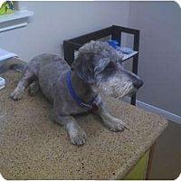 Adopt A Pet :: MATTHEW - Bryan, TX