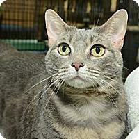 Adopt A Pet :: Ashley - New York, NY