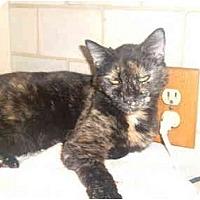 Adopt A Pet :: Toya - Bedford, MA