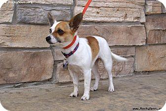 Chihuahua Mix Dog for adoption in Newcastle, Oklahoma - Elsa