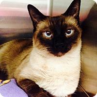 Adopt A Pet :: Koda - Newport Beach, CA