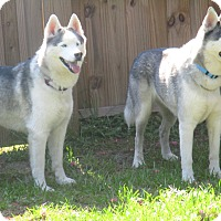 Adopt A Pet :: DENALI and KENAI - Jacksonville, FL