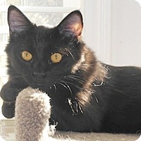 Adopt A Pet :: Bissel - North Highlands, CA