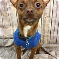 Adopt A Pet :: Pedro - Lake Elsinore, CA