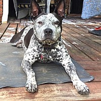 Adopt A Pet :: Skye - Courtesy Post - Dallas, GA