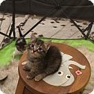 Adopt A Pet :: Cygnus - West Palm Beach, FL