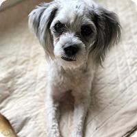 Adopt A Pet :: Hansi - Arlington, VA