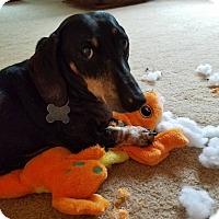 Adopt A Pet :: Bowie - Decatur, GA