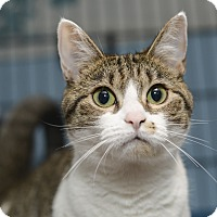 Adopt A Pet :: Sloan - Whitehall, PA