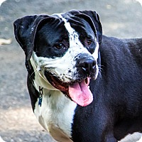 Adopt A Pet :: Webster - Port Washington, NY