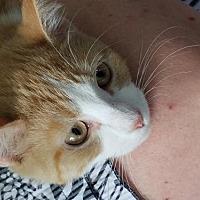 Adopt A Pet :: Fenla - Troy, IL
