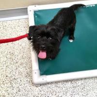 Adopt A Pet :: Ikey - Fairfield, OH