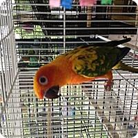 Adopt A Pet :: Jackie - Punta Gorda, FL