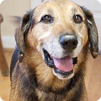 Adopt A Pet :: Eli - Knoxville, TN