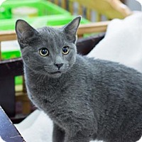 Adopt A Pet :: Sterling - Fountain Hills, AZ