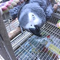 Adopt A Pet :: Makenzie & Baillee - Punta Gorda, FL