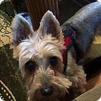 Adopt A Pet :: Milo - Beachwood, OH