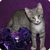 Adopt A Pet :: Thelma (Updated Photos) - Marietta, OH