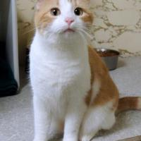Adopt A Pet :: Charlotte aka Tink - Westville, IN