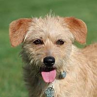 Adopt A Pet :: Lyssa - San Diego, CA