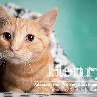 Adopt A Pet :: Henry - Salem, OH