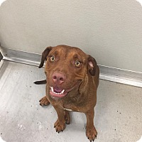 Adopt A Pet :: Maggy - Humble, TX