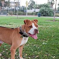 Adopt A Pet :: Berkey - Santa Monica, CA