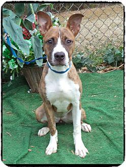 Labrador Retriever Mix Puppy for adoption in Marietta, Georgia - BEA