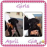 Adopt A Pet :: April - Marlton, NJ