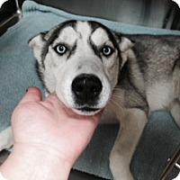 Adopt A Pet :: Izzy Needs Your Help - Belleville, MI